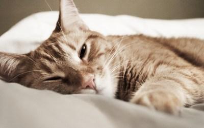 12 sposobów nazdrowy sen