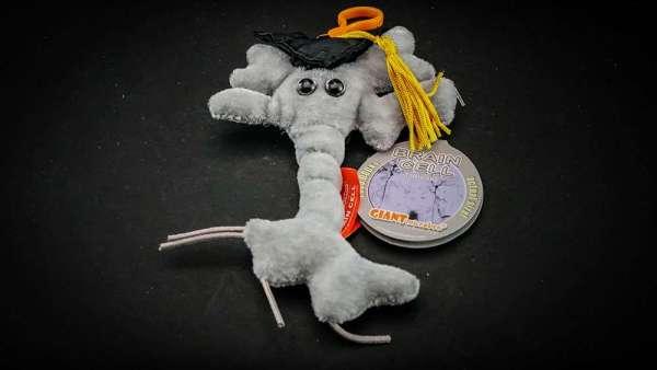 Giant Brain Cell plush toy