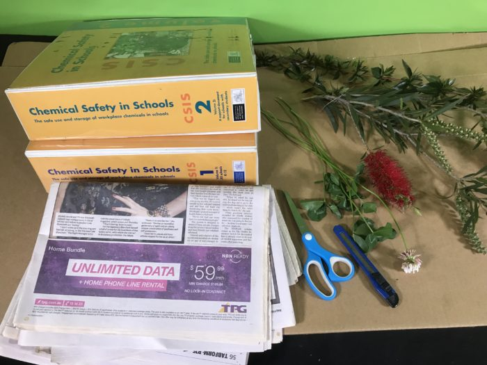 Create a plant collection - materials needed
