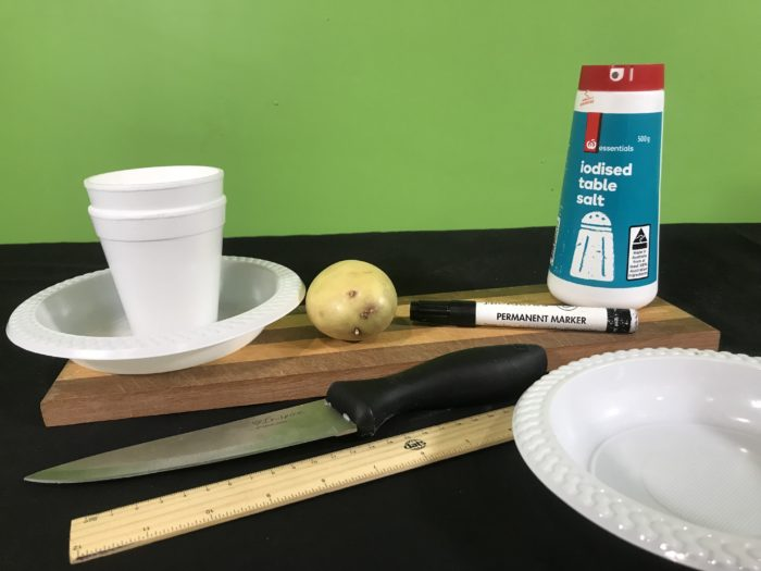 Shriveling potato science science experiment - materials needed