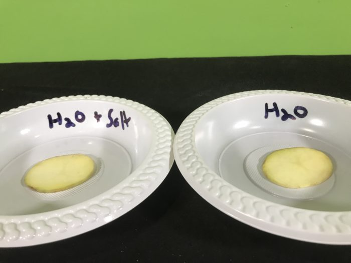 Shriveling potato science science experiment - potato slices on plates