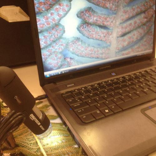 DIgital microscopy of a fern