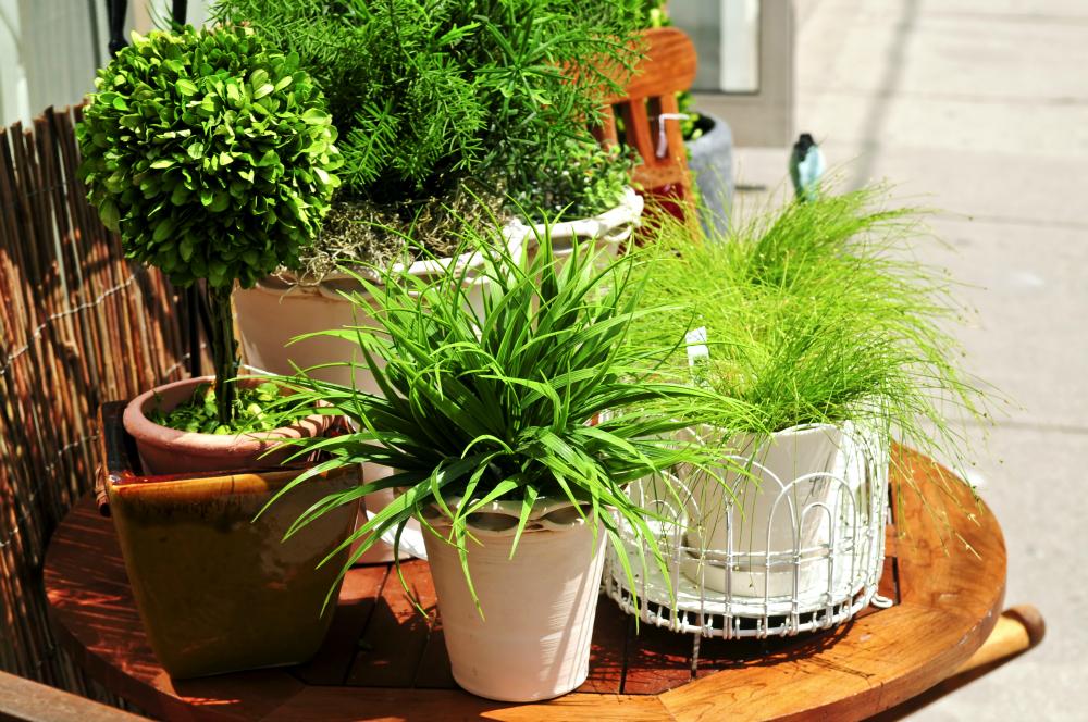 Wyevale Garden Centres - Urban Gardening IMG