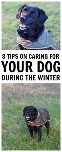 8 tips on caring for your dog during the winter