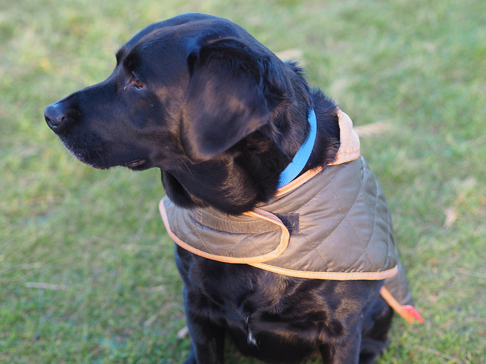 9 tips on caring for your dog during the winter