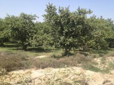 Fatima Jinnah Town Multan G Block - 17 Kassi Minor Road Garden