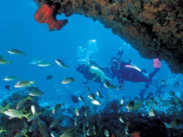 Key+West+Diving