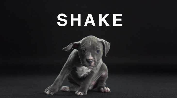 Shake with Dogs