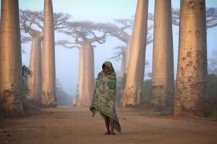 Une fille et des baobabs à Madagascar