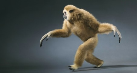 More Than Human de tim Flach