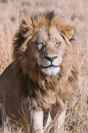 africanparks-4
