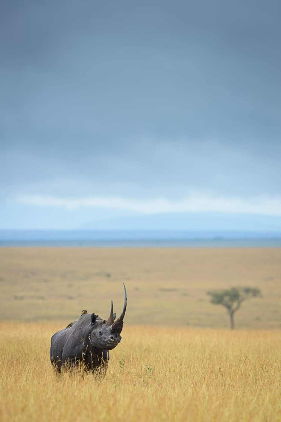 africanparks-5
