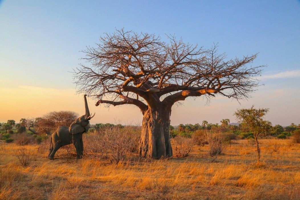 africanparks-7