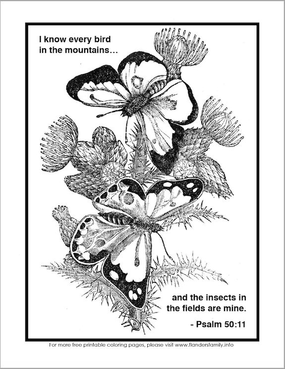 Breathtakingly Beautiful Butterflies: A review of Butterfly Palace in Branson and a free printable coloring page from www.flandersfamily.info