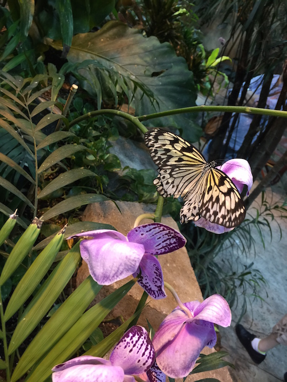 The Butterfly Palace in Branson, MO