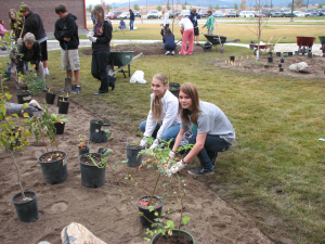 Glacier High School Native Plant Garden