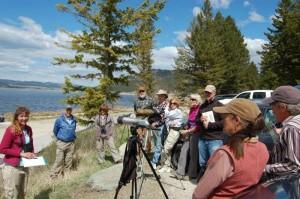 5-4-2013 Wetland Birds Tour (2)