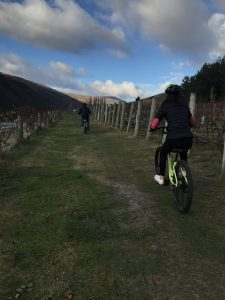 Bike rentals available at Gibbston Valley Winery