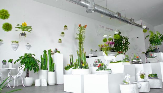 Plant_the_future_ wynwood_