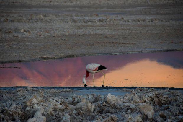 Reserva_dos_Flamingos_Atacama_13