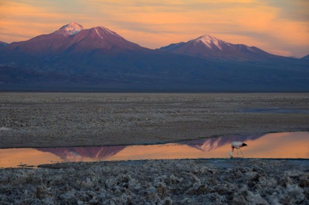 Reserva_dos_Flamingos_Atacama_14