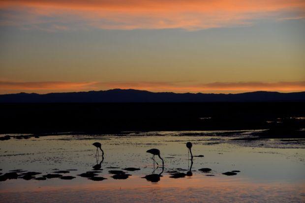 Reserva_dos_Flamingos_Atacama_17