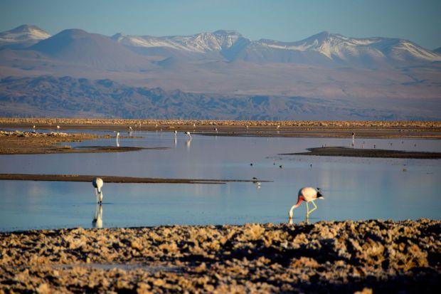 Reserva_dos_Flamingos_Atacama_2