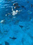six-senses-zil-pasyon-seychelles-106