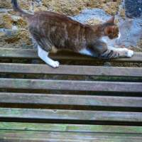 Farnese - Cats