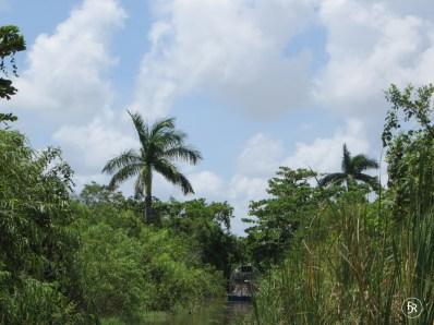 Airboat tour through the Everglades