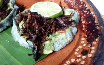 Crickets on tortillas Mexico City