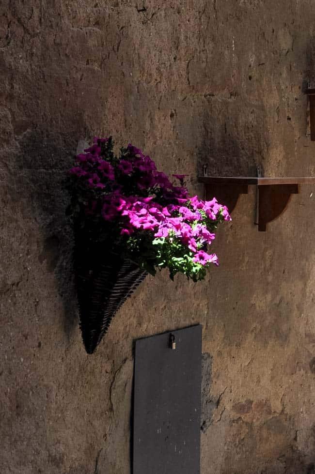 Traveling in the Heart of Tuscany. Street-side purple flowers. |www.flavourandsavour.com