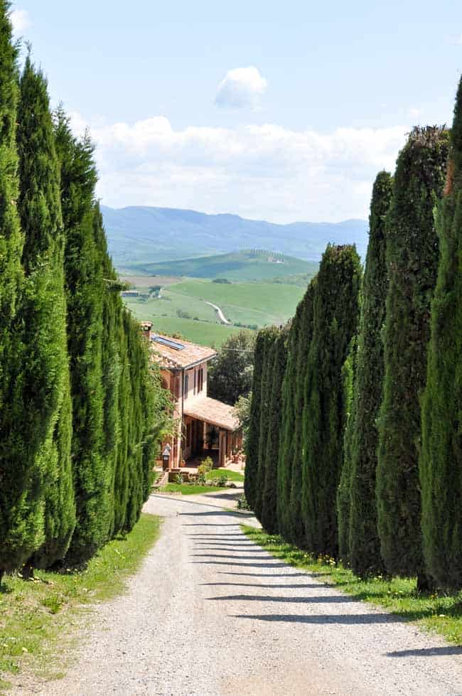 Traveling in Tuscany. View of cypress tree-lined driveway