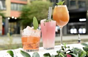 botanical bar drinks gin