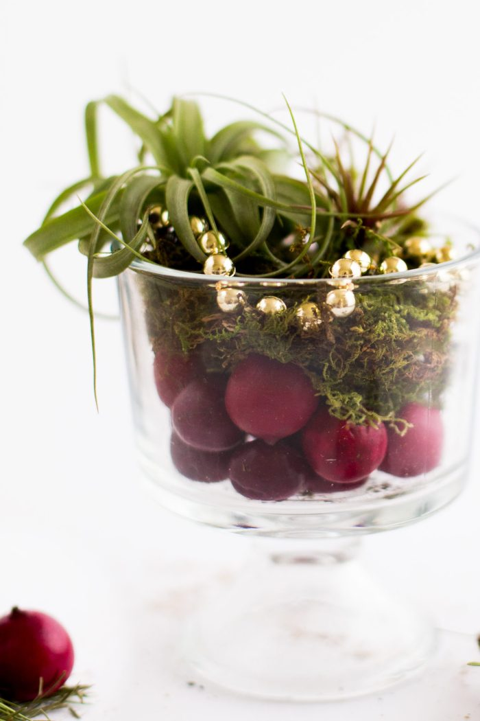 DIY Air Plant Holiday Gift