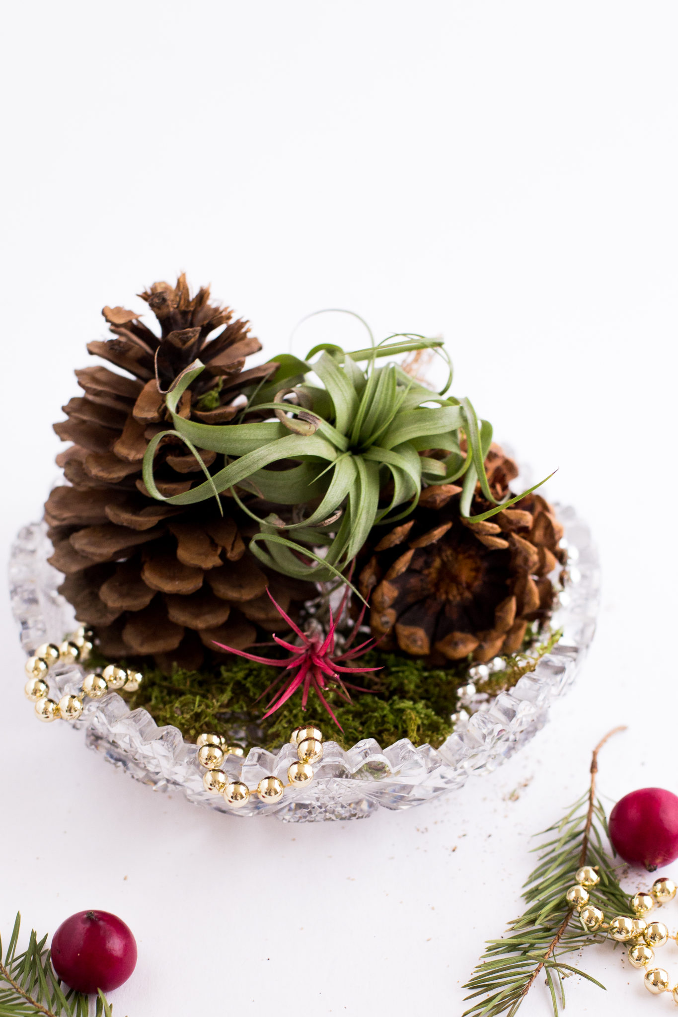 Holiday DIY Air Plant Gifts - Flax & Twine
