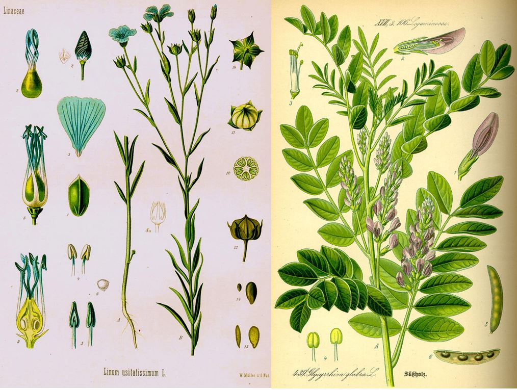 liquorice and linseed ingredients for traditional cough medicine remedy