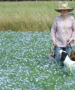 dogs in linseed