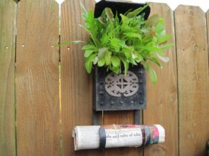 """""""In the early spring I plant this mailbox with mixed blend of leaf lettuce..now that the hot weather has made the lettuce subside..I transplanted sedum to the mailbox..."""""""