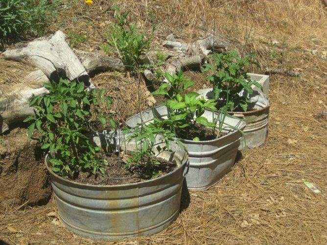 My Galvanized Wash Tub Garden Flea Market Gardening