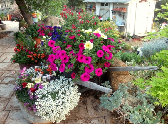 "Sue Langley, ""I can't believe how well these did from last year's petunia plants!"""