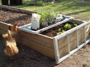Di-Ellen's raised beds and 'cold frame'