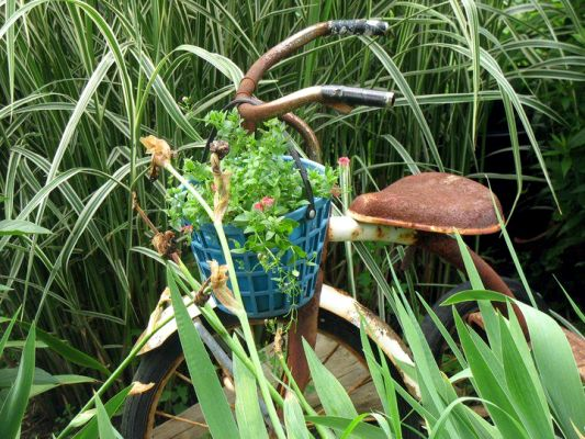 Jenny Alexander proves, even with a plastic basket, blue goes with rust!