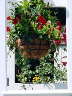 Door Arbor Mandevilla