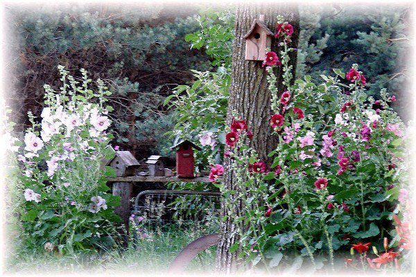 Jeanne Sammons's hollyhocks and birdhouses by an old tree.