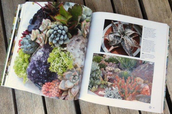 Succulents Simplified has gorgeous photos!
