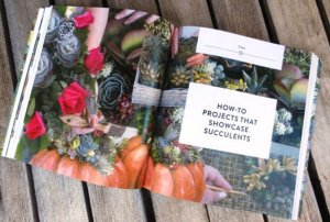 Succulents Simplified How-To Projects
