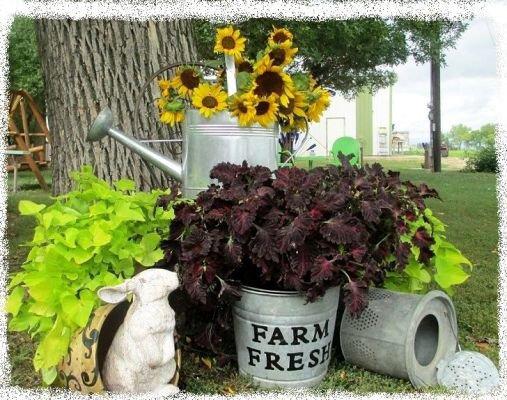Farm fresh!