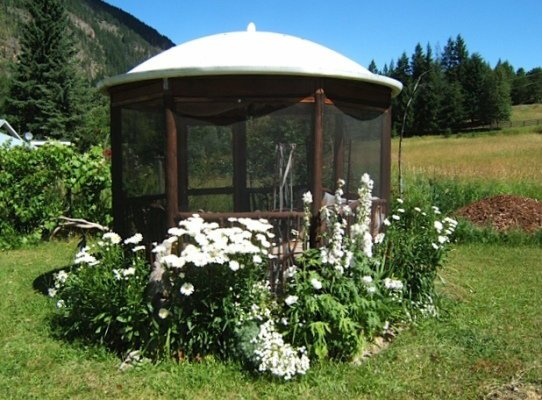 Shasta daisies--3 varieties, delphinium, white phlox
