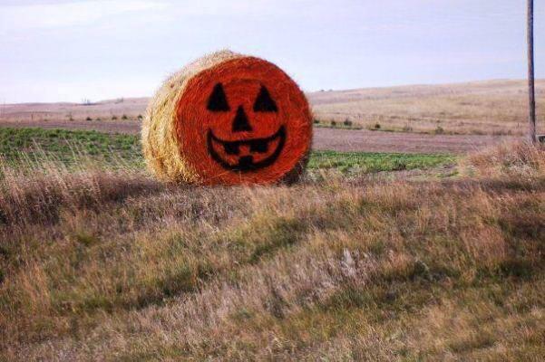 Debra Clark's photo,...a field pumpkin